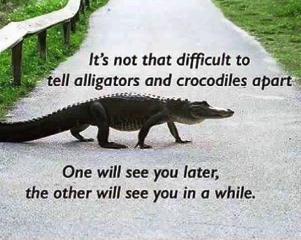 Ali Croc.png