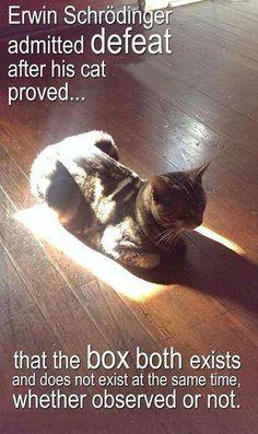 -schrodingers-cat-.jpg